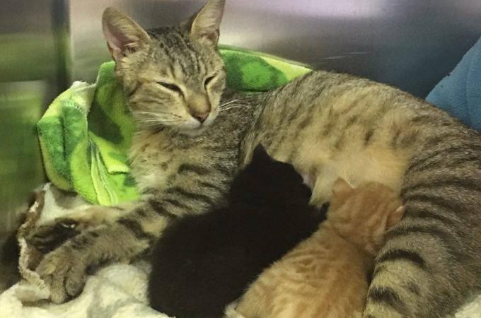 ある日離れ離れになってしまった母猫と子猫。現場作業員の行動によって再会を果たす