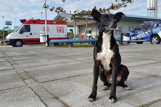 飼い主が元気な姿で戻ることを信じ8ヶ月間病院の前で待ち続ける犬