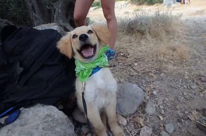 新しい飼い主さんに引き取られた犬たちが最初の日に見せた素敵な笑顔
