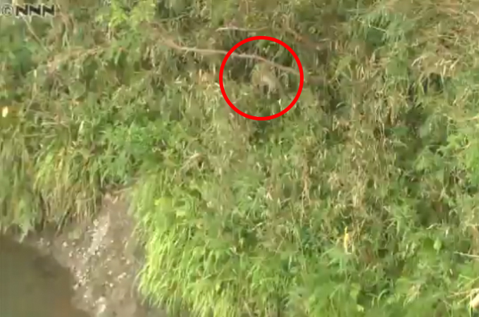 川岸に取り残された子犬 男性が船で…救出