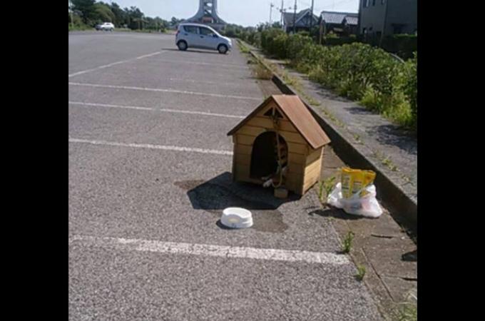 7月の炎天下の中、犬小屋ごと駐車場に捨てられた犬が発見される