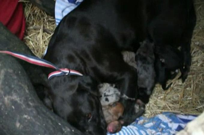 凍死寸前の家族を救うため動物保護スタッフを誘導する父犬。その後無事に保護される