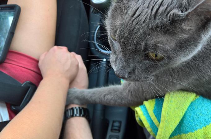 衰弱していく愛猫に飼い主が下した安楽死という決断。最期に愛猫がとった行動とは