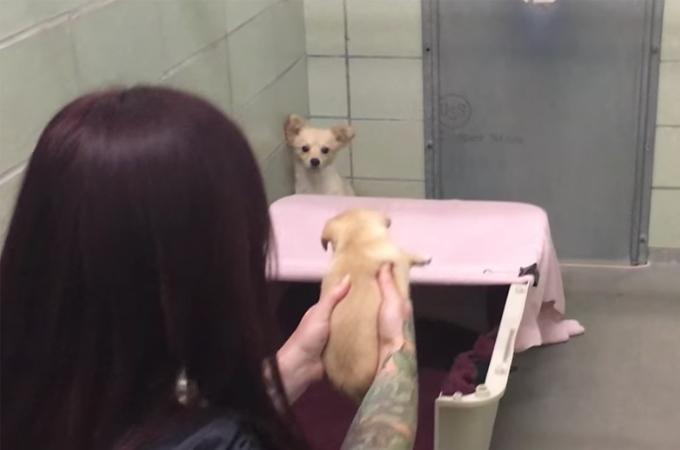保護した犬に出産の形跡が。愛護団体のスタッフが、子犬を探し出し再会を果たす動画