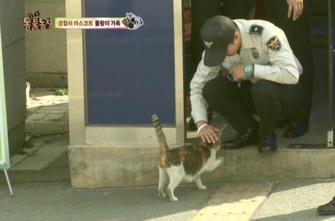 出産間近な野良猫が警察署を訪れた理由とは
