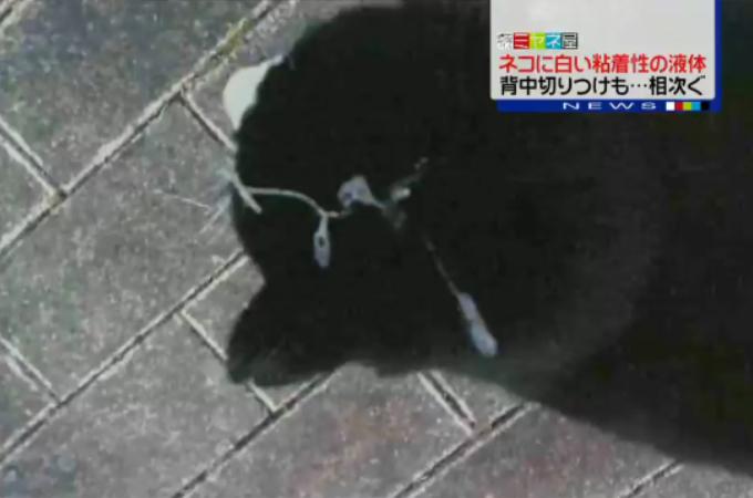 ネコに粘着性液体 公園で被害相次ぐ 千葉