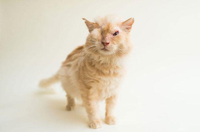 虐待で酸をかけられ視力を失った猫など。障害を持つ動物の命を預かること
