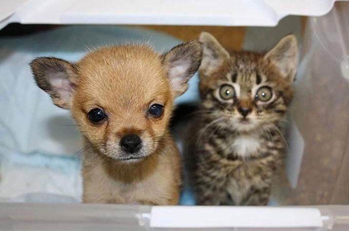 孤立した子猫がシェルターで出会った子犬と支え合いお互いの救いとなる