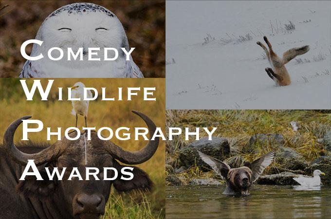 決定的瞬間!思わず二度見してしまう野生動物たちのおもしろ画像15選