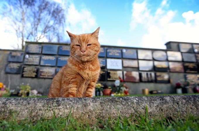 20年もの間、お墓を守り悲しみに暮れる人々を癒し、愛され続けた猫が老衰で亡くなる