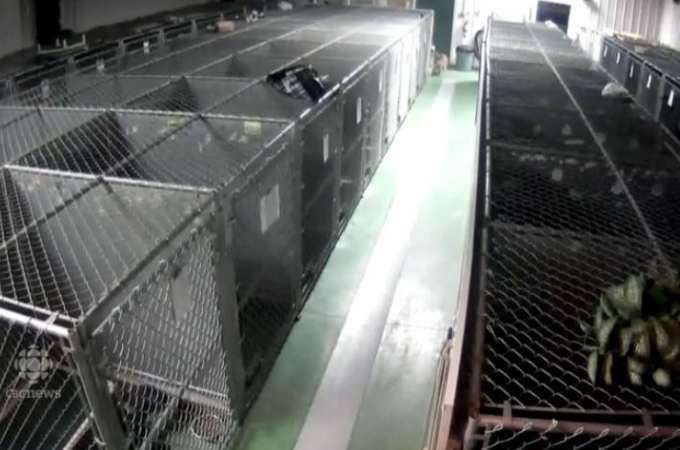 保護施設で寂しく鳴く子犬たちを心配した犬がケージを抜け出し寄り添う理由とは