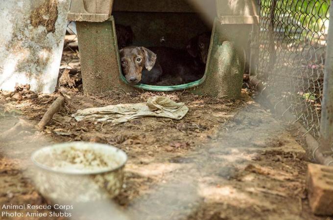 パピーミルとして多くの動物が暮らしていた最悪の現場。健康な動物は1匹も確認されなかった
