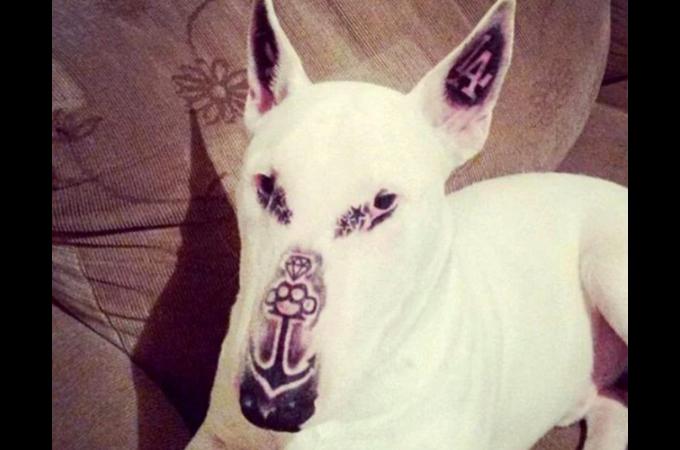 犬にタトゥーを入れFacebookに投稿した男性。その後、炎上しアカウントを削除
