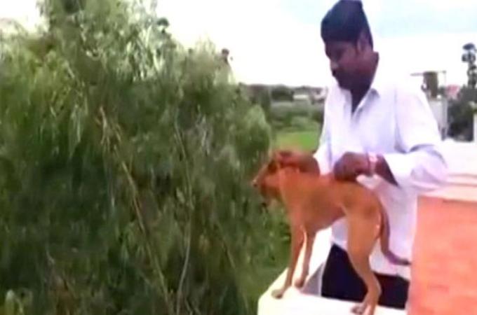 屋上から犬を放り投げた動画をSNSに投稿したインドの男性。世界中から非難の声