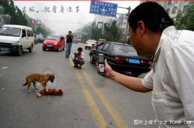 中国の道路で犬が交通事故に遭い心配そうに寄り添うもう1匹の犬。その姿に周りの人間はカメラを向け撮影する