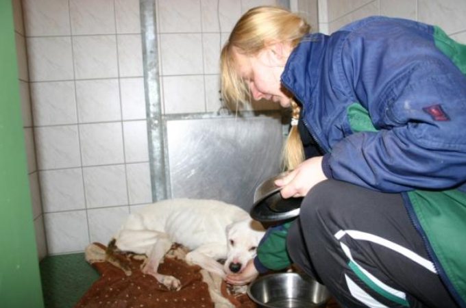 引っ越しの時に置いていかれた4匹の犬。4週間もの間、飲まず食わずの状態で発見される。