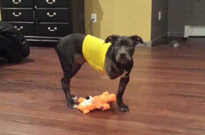 ハロウィンの夜に走行中の車から投げ捨てられ前脚を失った1匹の犬