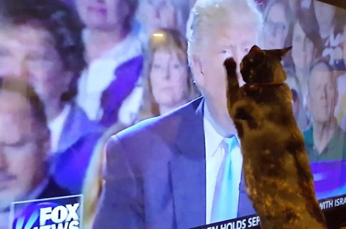話題のドナルド・トランプ新大統領が苦手なペットたちの面白動画