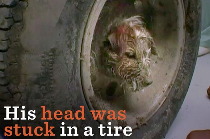 タイヤに頭がハマったまま身動きの取れなくなってしまった1匹の犬