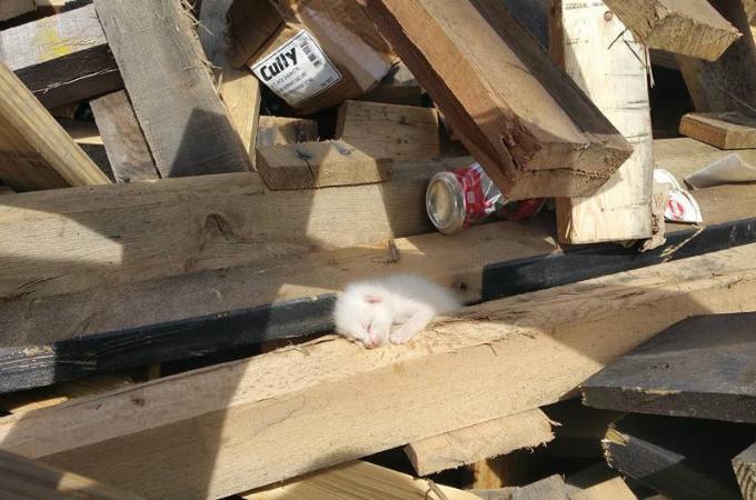 廃材置き場で猫の鳴き声に気づいた男性。それから7時間かけ廃材を動かし子猫たちを救う