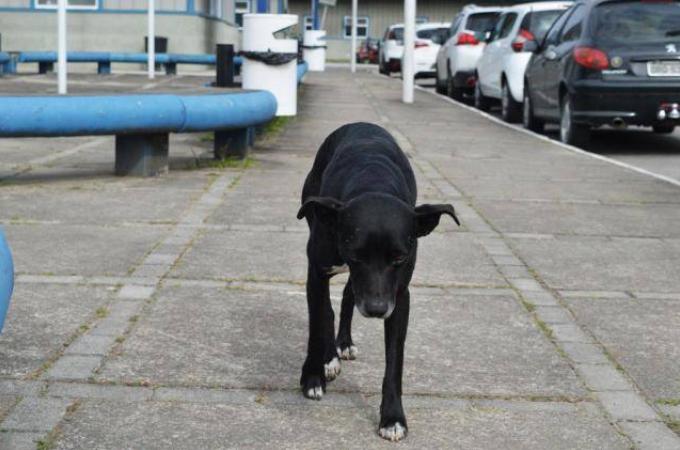 搬送先の病院で亡くなった飼い主を8ヶ月待ち続けた犬。里親を見つけるも脱走し再び病院へと戻る姿に胸が暑くなる