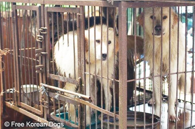 飼い主によって犬肉用のドッグファームに売られた2匹の犬が奇跡的に救出される