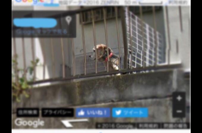 亡くなった愛犬がgoogleのストリートビューに。家族の帰りを待つ姿に思わず涙