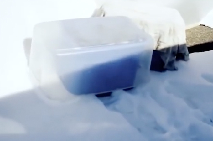 雪の降る中、プラスティック・ケースに入れられ捨てられた5匹の子犬たち。