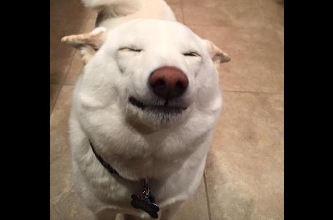 捨てられていた過去を持つ柴犬のキンタ。しかし、素敵な飼い主によって最高の笑顔を見せる