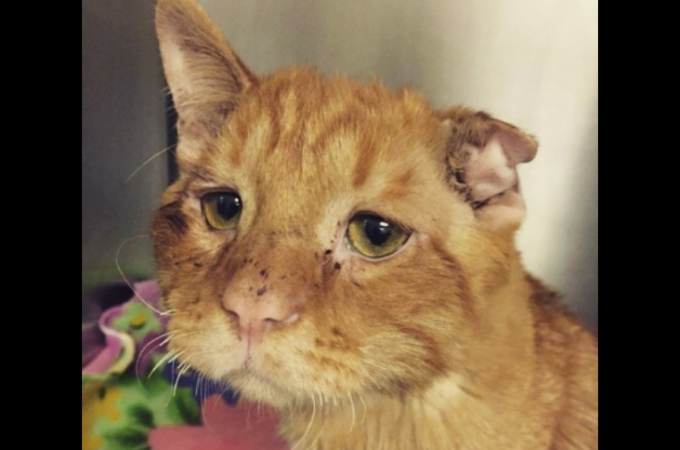 生きることを諦め悲しい表情を浮かべる1匹の猫。安楽死の前日に保護され、その1週間後に見せた驚きの変化とは
