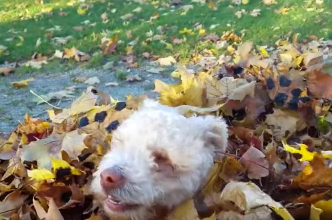 【動画】盲目の子犬がはじめて体験する落ち葉に大はしゃぎする様子に思わずほっこり!