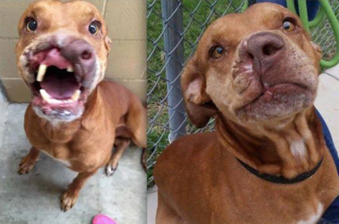 「外見が悪いのでその犬はもういらない」」と飼い主に見捨てられた犬。手術を受け笑顔を取り戻す