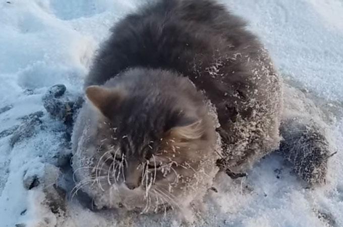 摂氏−35度の中、足が地面に凍りついてしまった野良猫が見つかる