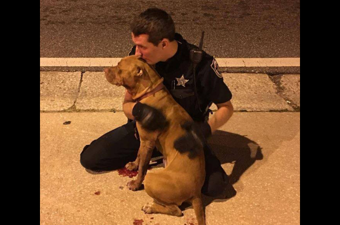道路の放置され怯えた2匹のピットブルを保護した保安官補。その様子に多くの称賛が寄せられる