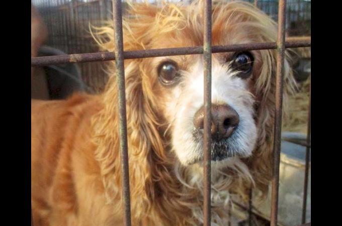 韓国で年間8万匹の食用犬が取引されていた市場が閉鎖。これにより犬食業界が大きく変化すると注目が集まる