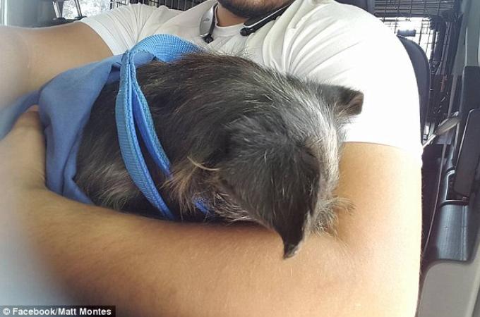 「凶暴だから」と言われていた犬が1人の男性に心を開き優しい犬へと生まれ変わる