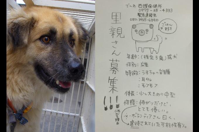 路上で彷徨う犬を保護し、SNSの拡散によって無事に飼い主が見つかるも「処分して下さい」とひどい言葉が返ってくる