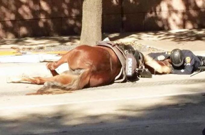 警官とパトロール中に不運にも事故に遭ってしまい、命を落とした馬。労わるコメントが多く寄せられる