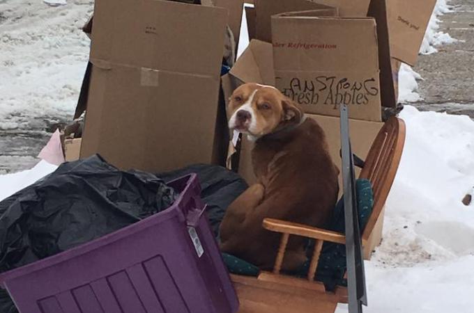 極寒の中ゴミと一緒に捨てられた犬。外での生活を2週間も耐え続けたのちに保護される