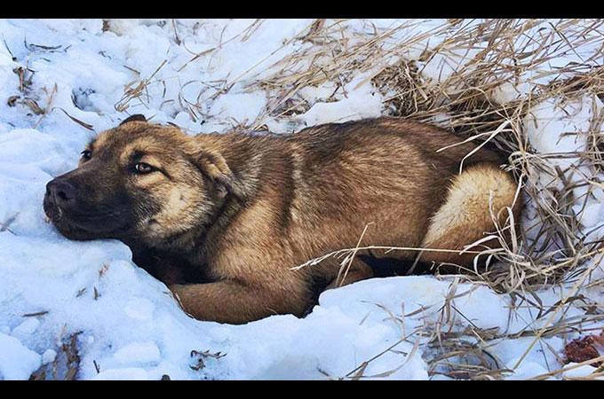 車とぶつかり骨盤損傷 12時間雪の中で助けを待ち続けた迷子犬