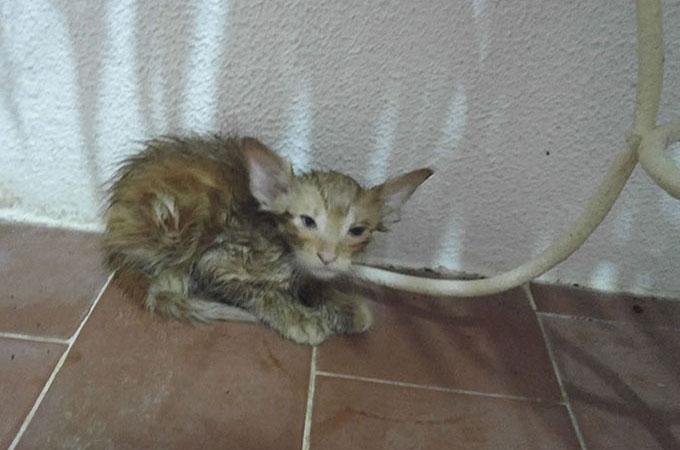 電気ポストに触れ109度の熱で身動きが取れなくなり助けを求めて泣き叫ぶ子猫