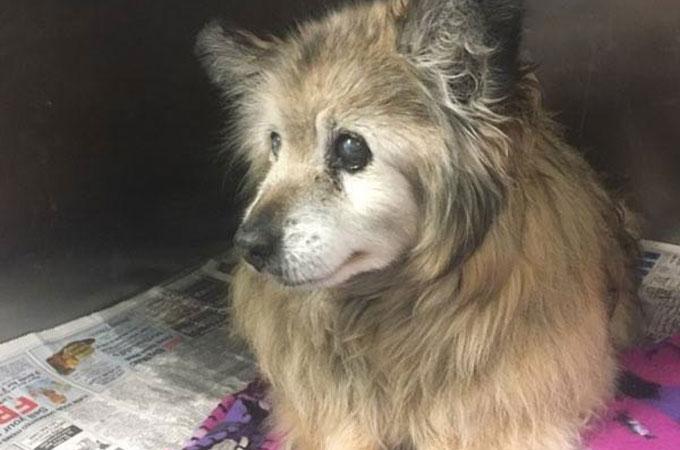 終末期の病気を患い捨てられたシニア犬を救うために動き出した1人の女性