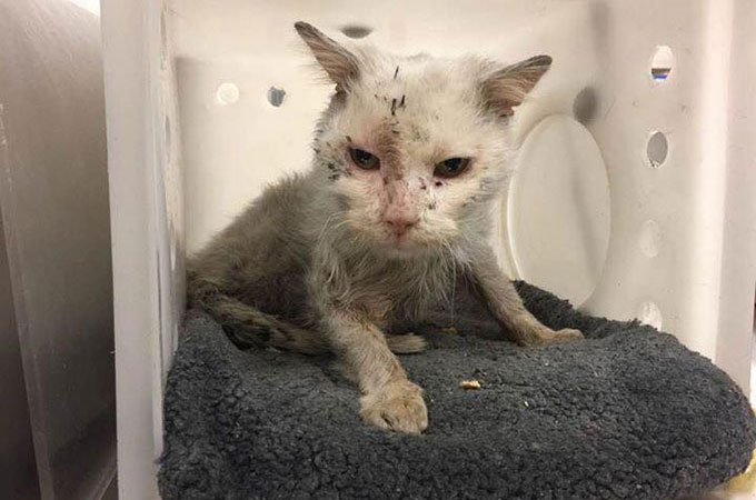 アライグマ捕獲用の罠に捕まり発見された1匹の子猫の驚くべき本当の姿とは