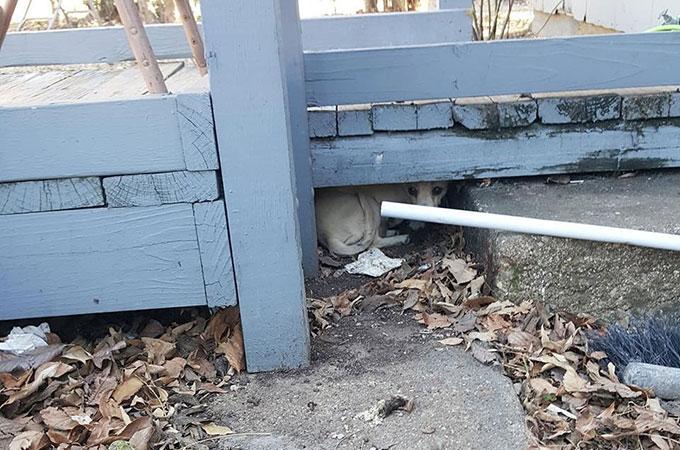 迷子犬の救助のため住処となっていた玄関のウッドデッキを開けるとそこには驚きが