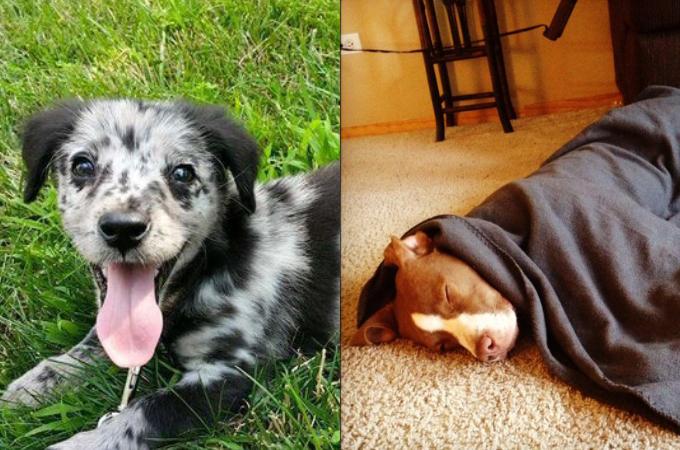 野良犬・保護犬が家族として迎え入れられたその日の写真。様々な表情に胸が熱くなる