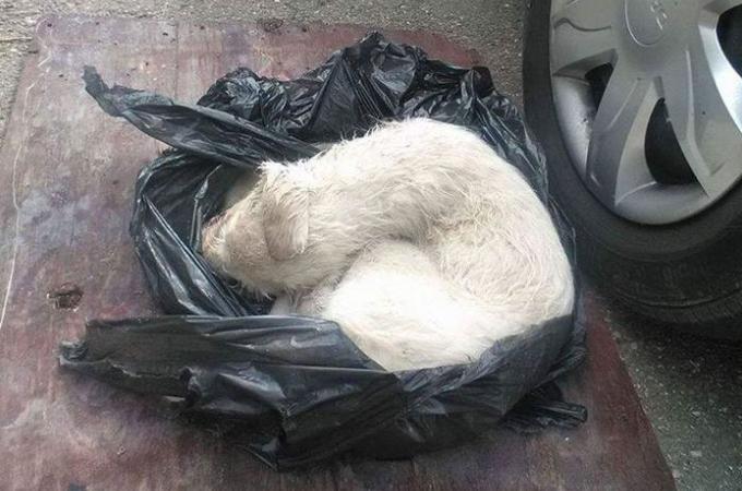 頭部に酷い打撃を受けた状態でゴミ袋に捨てられていた子犬。体に虫がつき死の淵を彷徨うも奇跡的に生還