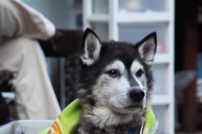 足腰が悪くなった散歩が大好きな16歳の老犬のために飼い主さんが作ったものとは