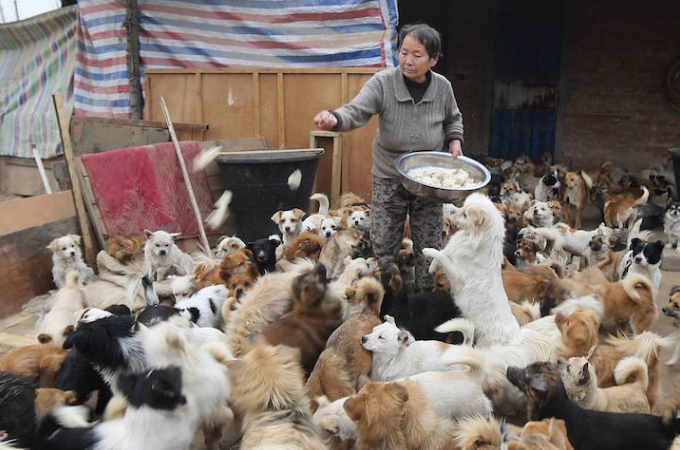 犬の魅力に惹かれ、毎日1300匹の保護犬のために400kgもの餌を用意する中国の女性たち。