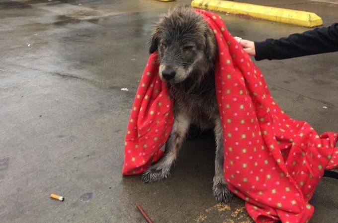 雨の中びしょ濡れで絶望の表情を浮かべていた犬。保護されて見せた大きな変化とは
