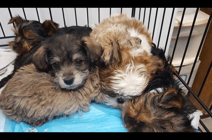 高速道路で横転したトラックからなんと100匹以上の子犬が保護される